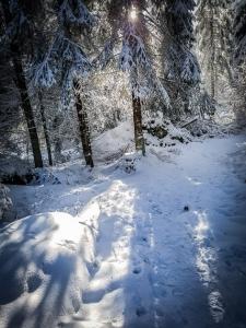 Sonne im verschneiten Winterwald