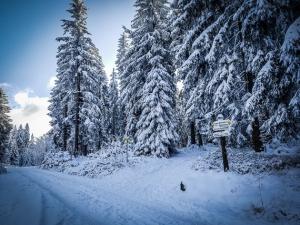 Winterwald tief verschneit