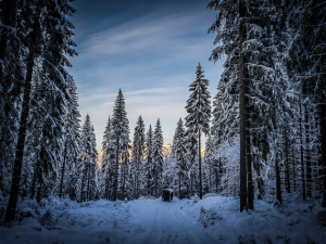 Erstes Abendrot im Winterwald