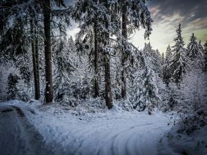 Abenddämmerung im Wald