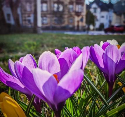 Sonneberger Frühling