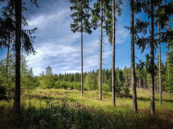 Thüringer Wald wandern