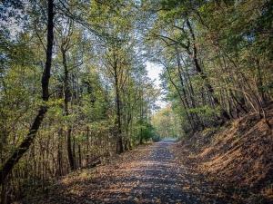 Weg steigt im Wald bergan