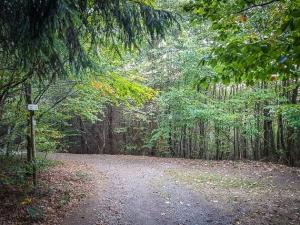 Höhenweg im Wald