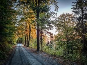 Kurze gerade Etappe im Wald