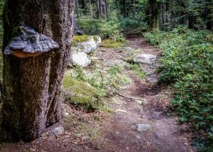 Felsiger Wanderpfad am Berghang