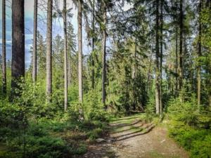 Weg ohne Wegweiser bergab