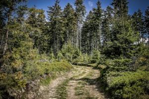Steiler schöner Wanderweg