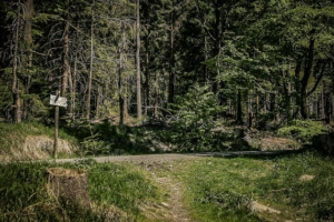 Mündung auf breiten Forstweg