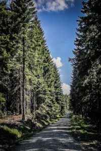 Breiter geschotterter Forstweg