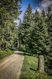 Forstrevier-Stein am Schneeberg