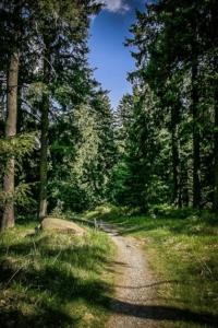 Schöner Wanderpfad führt bergab