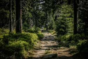 Felsiger Weg leicht bergab