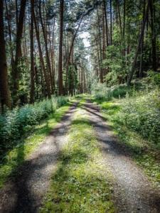 Schöner lichter Waldweg
