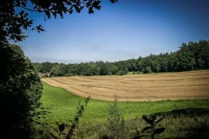 Große Lichtung mit Wiesen und Feldern