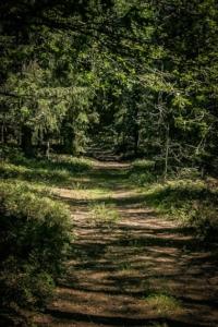 Gerader schöner Wanderweg an Bergkante entlang
