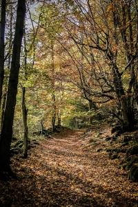 Weg im Laubwald