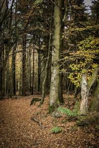 Durch den dichteren Wald