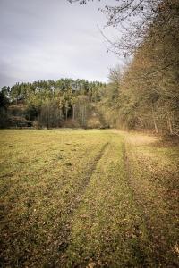 Erst am Waldrand entlang