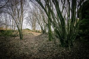 Weg in Richtung Lochautal