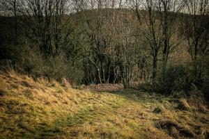 Dem Wiesenpfad folgen