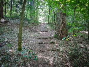 Naturtreppe im Wald