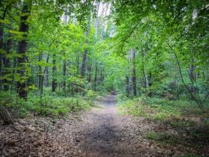 Gerader Wanderweg durch den Wald