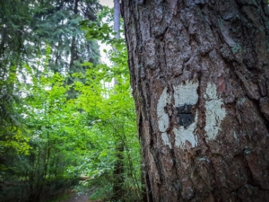 Wegweiser schwarzer Punkt am Baum
