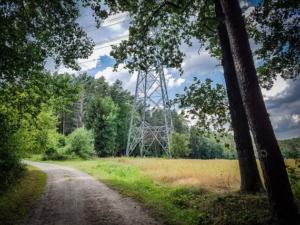 Waldschneise mit Strommast