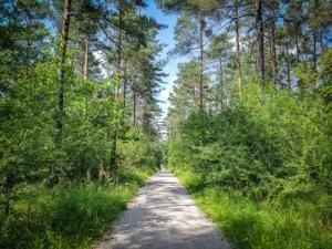 Schnurgerade durch den lichten Wald