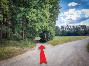 Schräg über Weg in den Wald