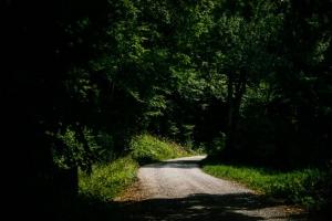 Breiter Weg in den Wald