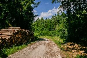 Auf breitem Forstweg