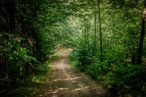 Breiter schattiger Weg