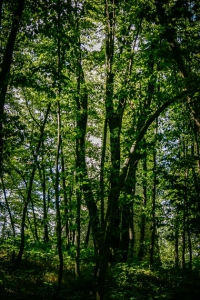 Wallerwarte Forchheim hinter Bäumen