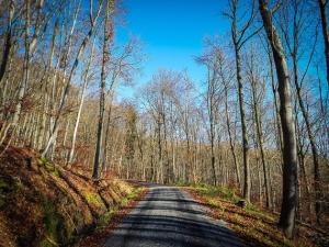 Forstweg im Laubwald
