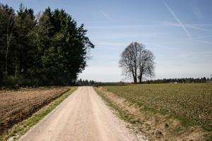 In Richtung Waldrand und Jura Solarpark