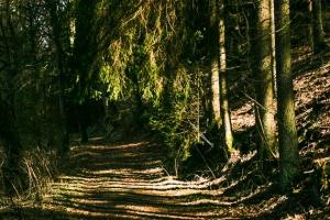 Wald unter aufragenden Felsen