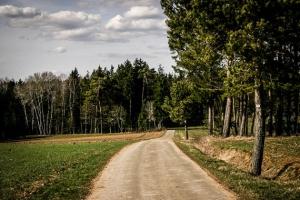 Zum Waldrand hin