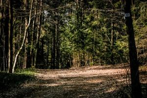 Hier im Wald rechts abbiegen