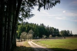 Weg aus dem Wald hinaus
