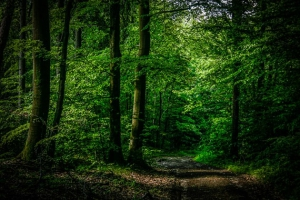 Geradeaus durch den Wald
