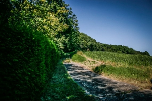 Weg am Waldrand bergauf