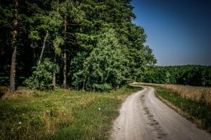 Auf einen Waldrand zu gehen