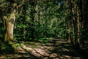 Schattiger Weg im Wald