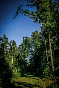 """Im Wald an Schild """"Berg 11"""" vorbei"""