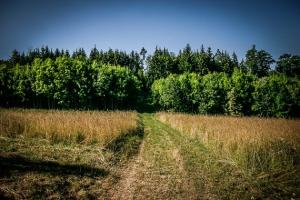 Gerade über eine Wiese zwischen den Wäldern