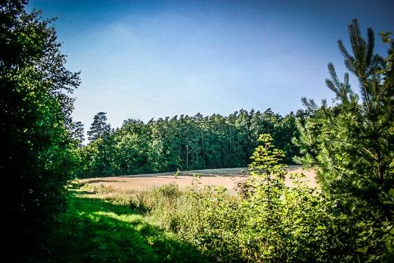 Wandern auf stillen Wegen bei Frankfurt im Steigerwald