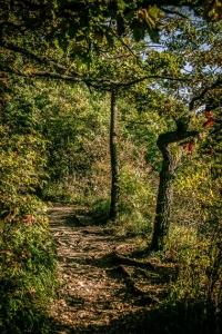Mainwanderweg Wandersteig im Wald