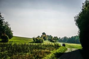 Links freie Fläche - rechts Waldrand